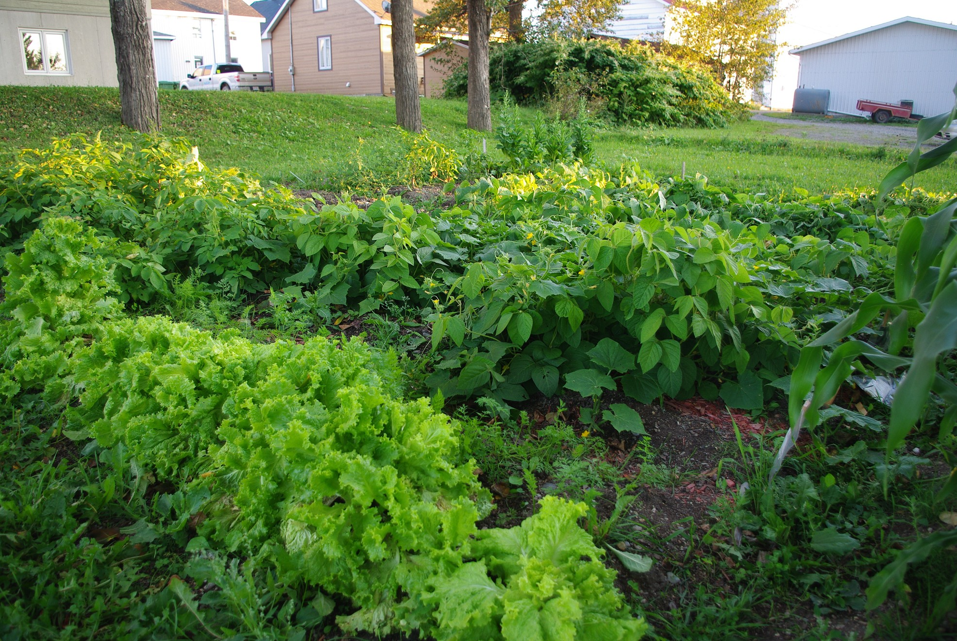 Jardin communautaire3