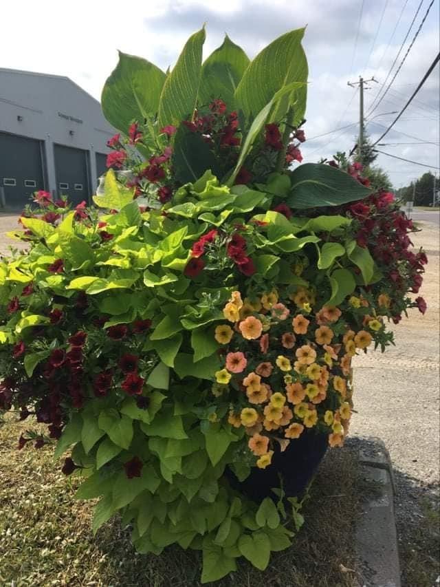 Pot fleurs garage 2021
